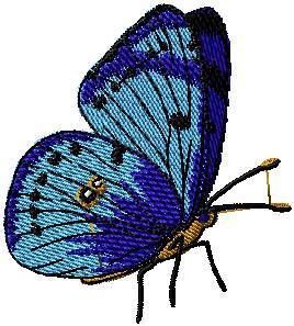 Motýl 13