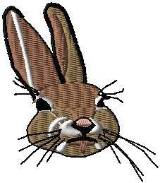 Zajíc hlava