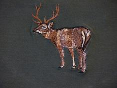 jelen celý