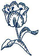 Tulipán obrys