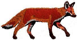 Liška celá