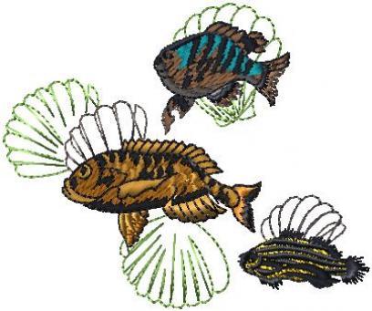 Ryby u mušlí