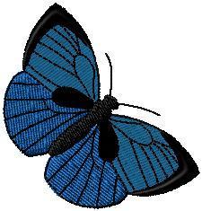 Motýl 9