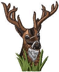 Jelen-hlava v trávě