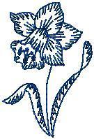 Narcis obrys